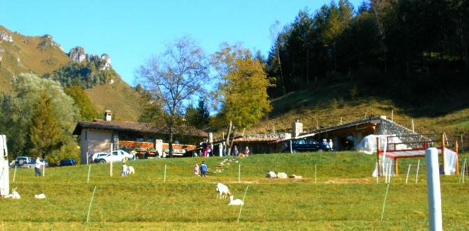 Agriturismo fattoria didattica fattoria della felicit for Piani di riproduzione della fattoria