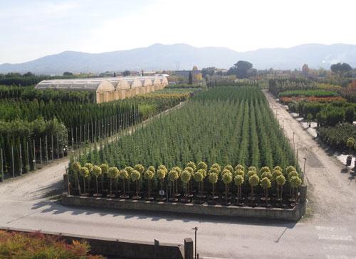 Vivaio per la vendita piante ornamentali chiti vittorio for Vendita piante ornamentali