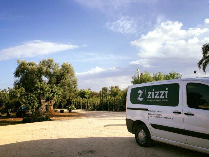 Vivai piante alberi garden design zizzi giovanni for Vivaio alberi